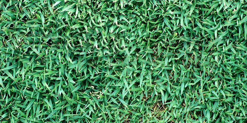 Queensland Blue Couch Turf